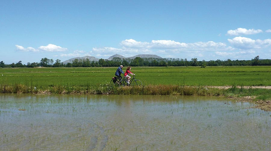 Rice fields in Pals