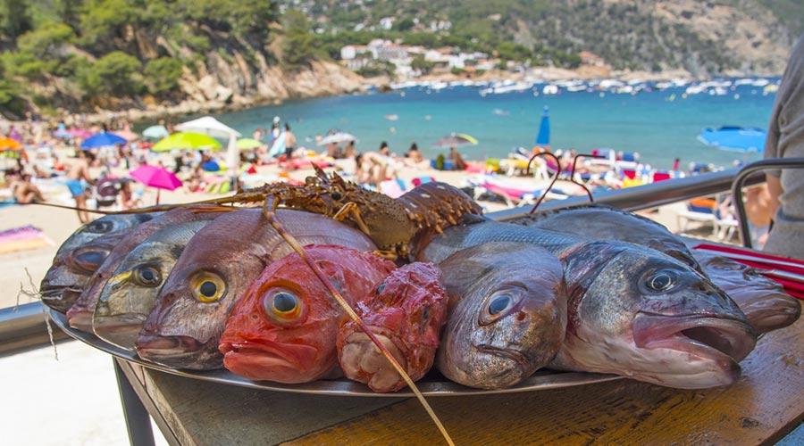 Rock fish in Begur