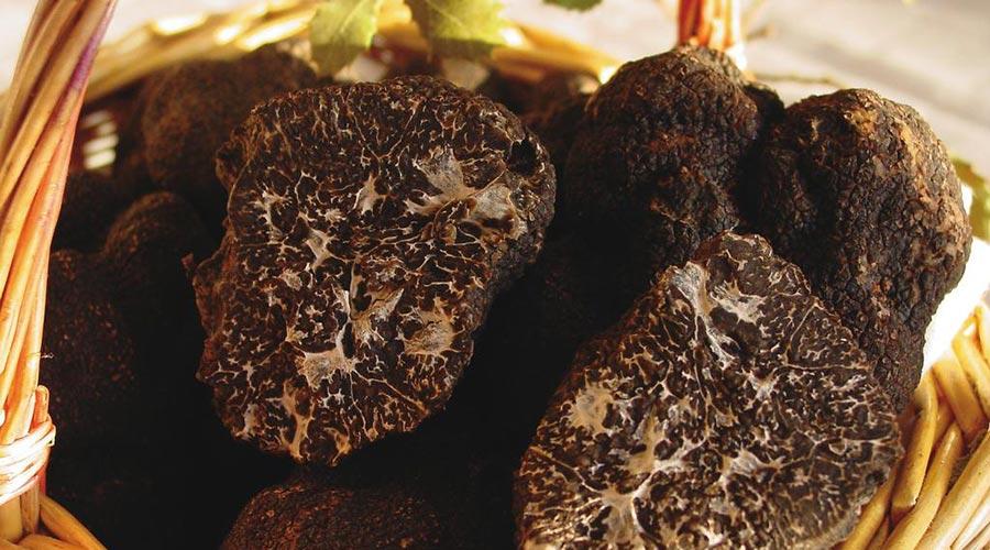Black truffle typical of Rubielos de Mora